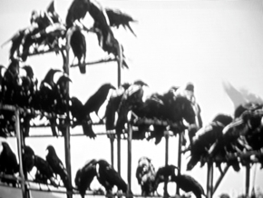 Alfred Hitchcock The Birds